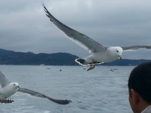 seagull from boat